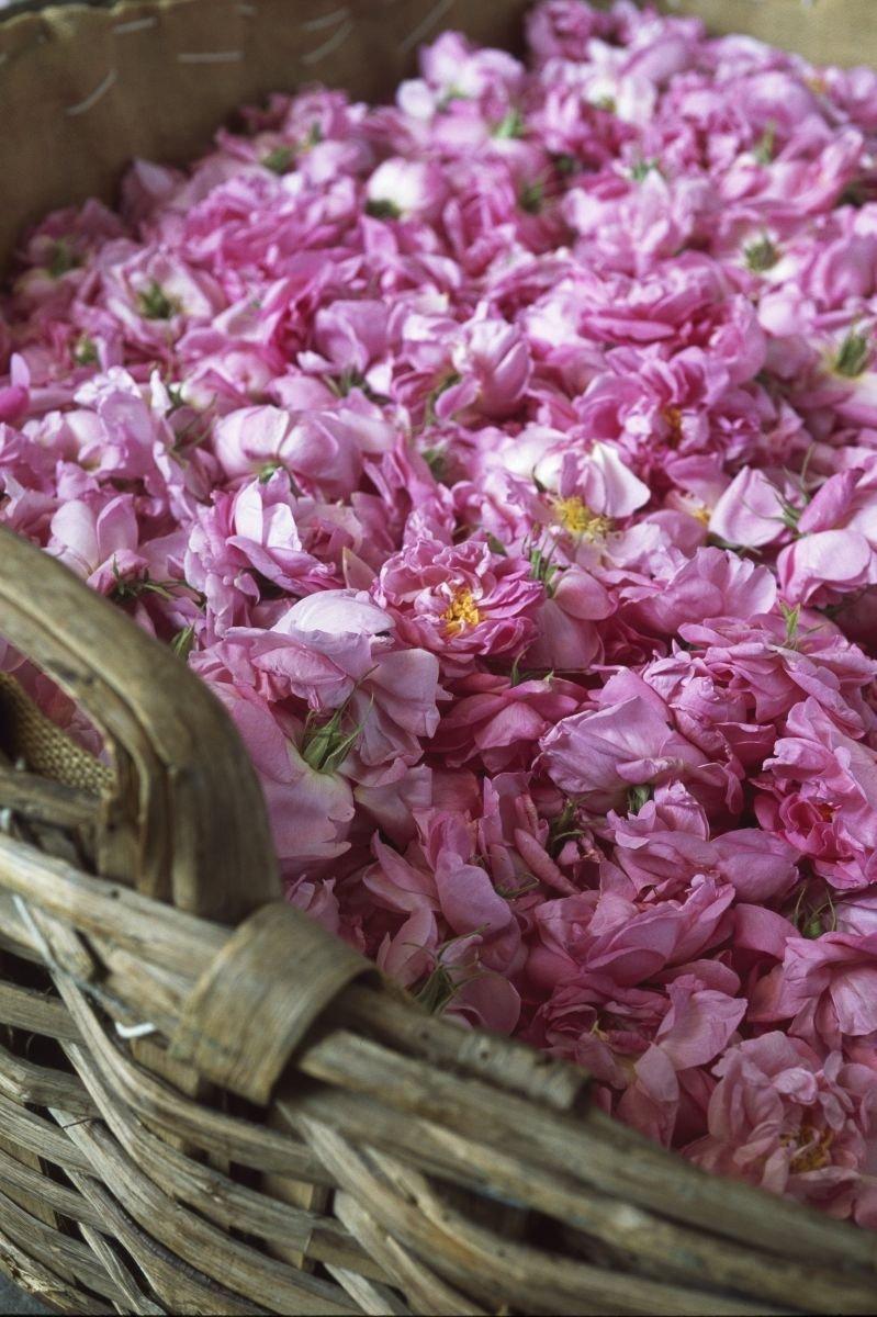 Famille Olfactive Parfum Et Cosmétique